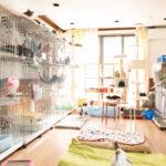 キンプリ・高橋海人は猫が好き?猫救出プロジェクトと保護施設!